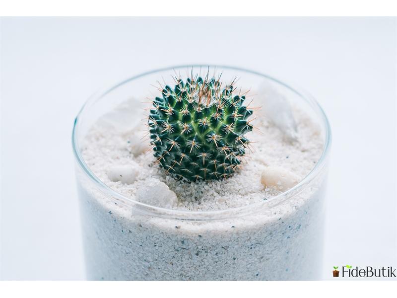Kaktüs ve Sukulentler