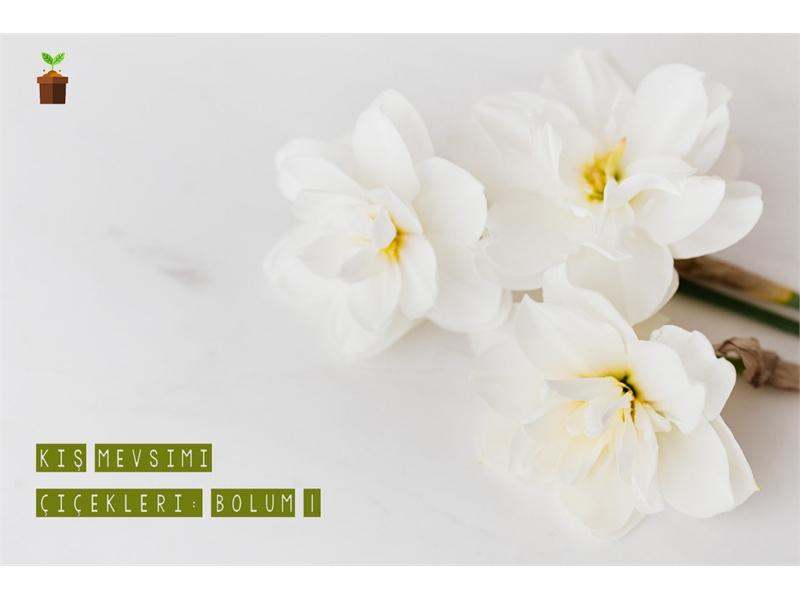 Kış Mevsimi Çiçekleri! (Bölüm 1)