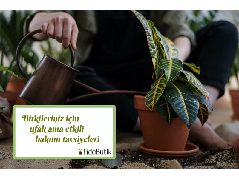 Bitkileriniz için ufak ama etkili bakım tavsiyeleri!