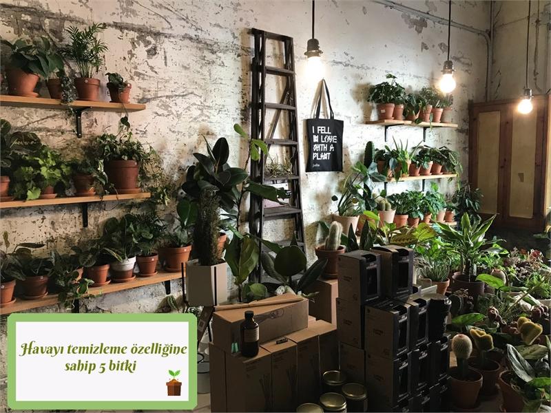 Bırakın evinizin havasını bitkileriniz temizlesin!