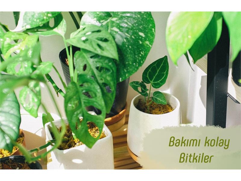 Bakımı Kolay 5 Bitki