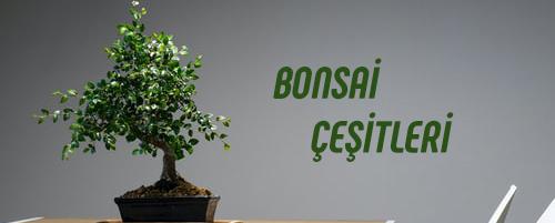 Bonsai Ürünleri